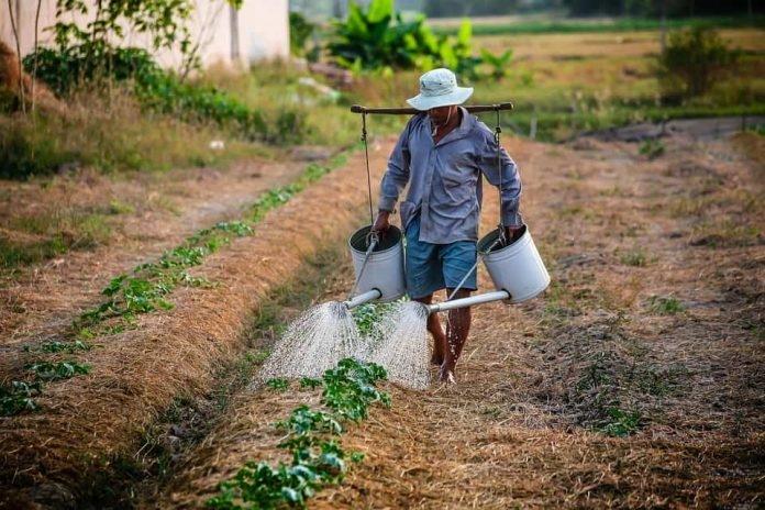 Atividade rural deve ser reconhecida para concessão de aposentadoria por tempo de contribuição